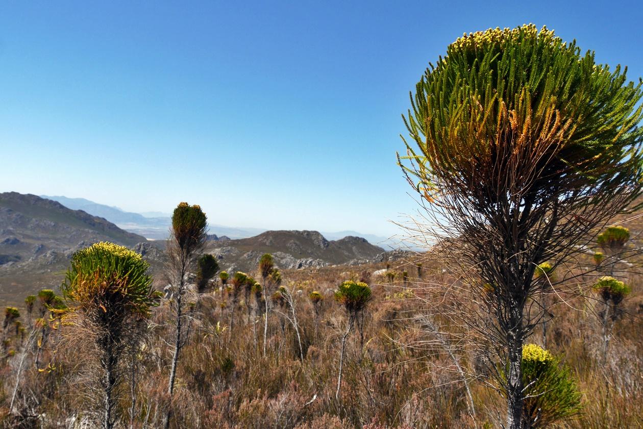Flora und Fauna auf der Cape Canopy Tour