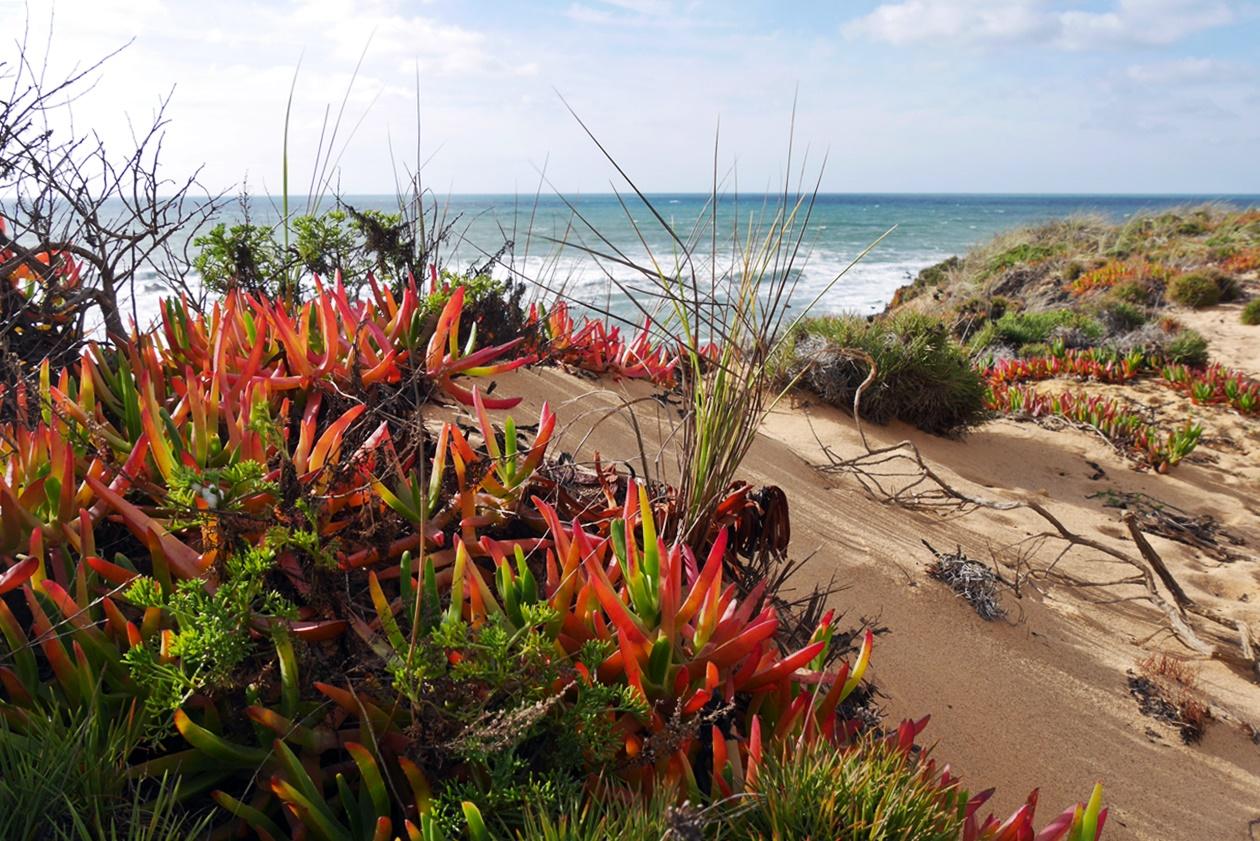 Sanddüne auf dem Fisherman´s Trail