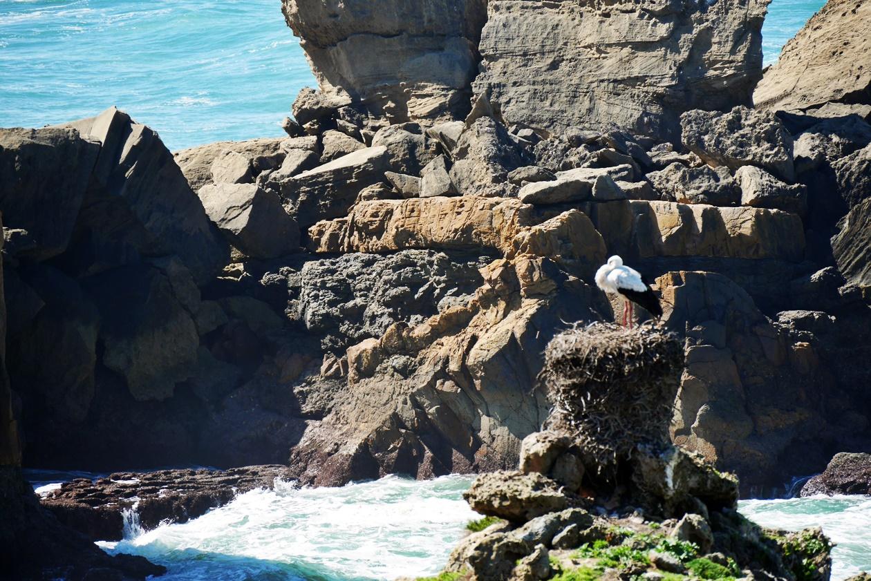 Storch direkt am Meer beim Wandern auf der Rota Vicentina
