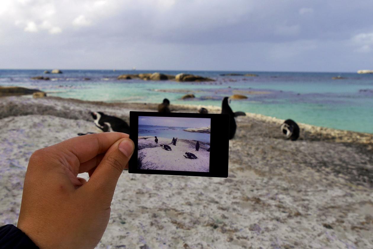 Pinguine auf einem Stein am Boulders Beach in Kapstadt