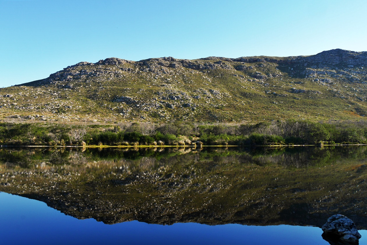 Spiegelung im Damm des Silvermine Nature Reserves