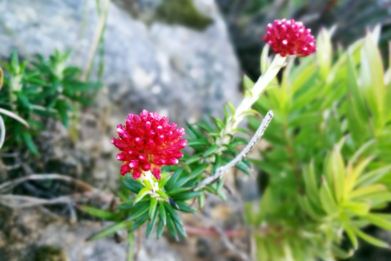 Bunte Blumen im Silvermine Nature Reserve
