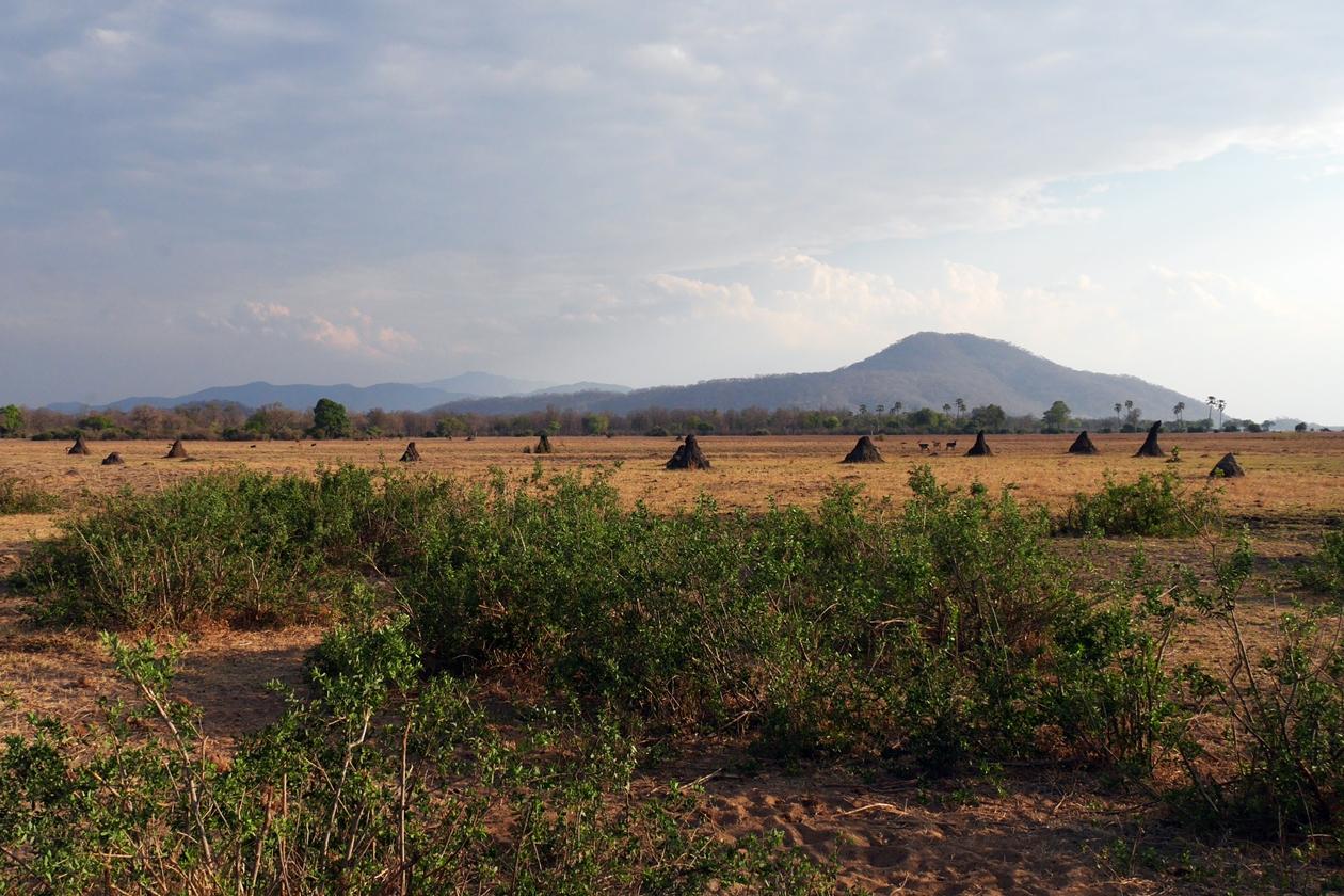 Termitenhügel im Liwonde Nationalpark