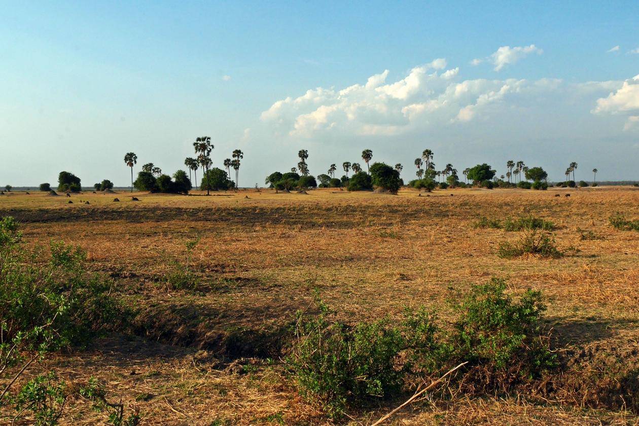 Landschaft im Liwonde Nationalpark in Malawi