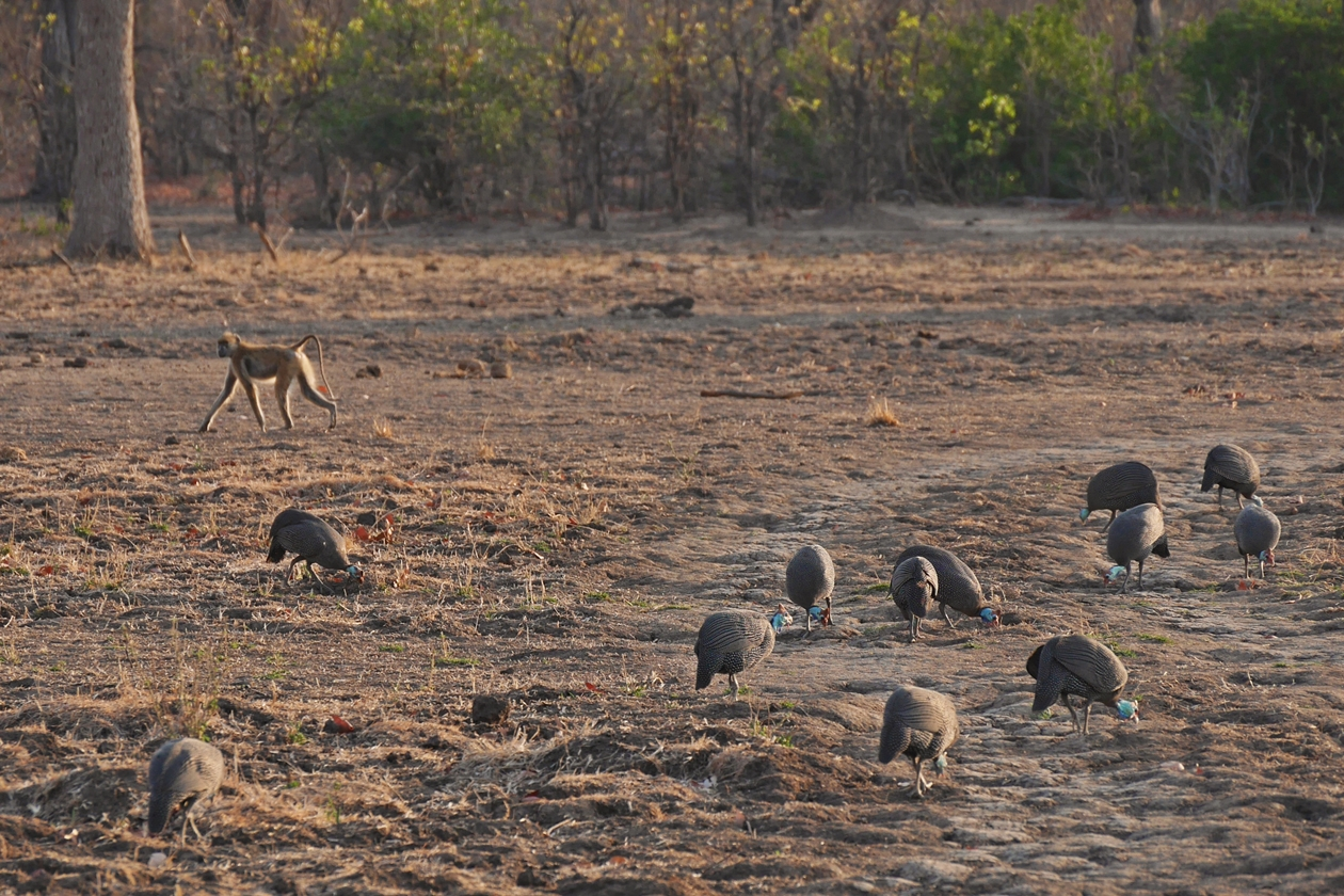 Tiersichtungen auf Safari im Liwonde Nationalpark