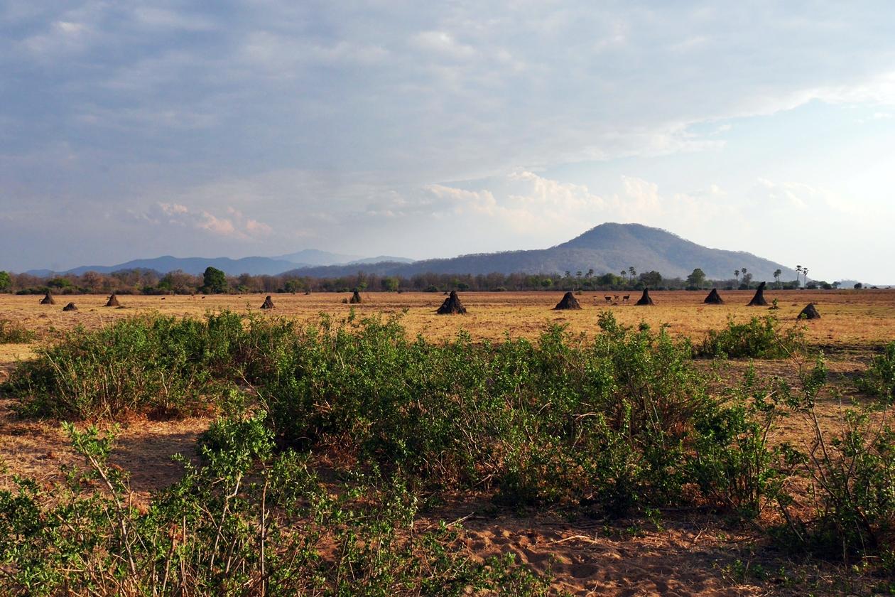 Landschaft mit Termitenhügeln im Liwonde Nationalpark in Malawi, als Beitrag zur Fotoparade 2/2018