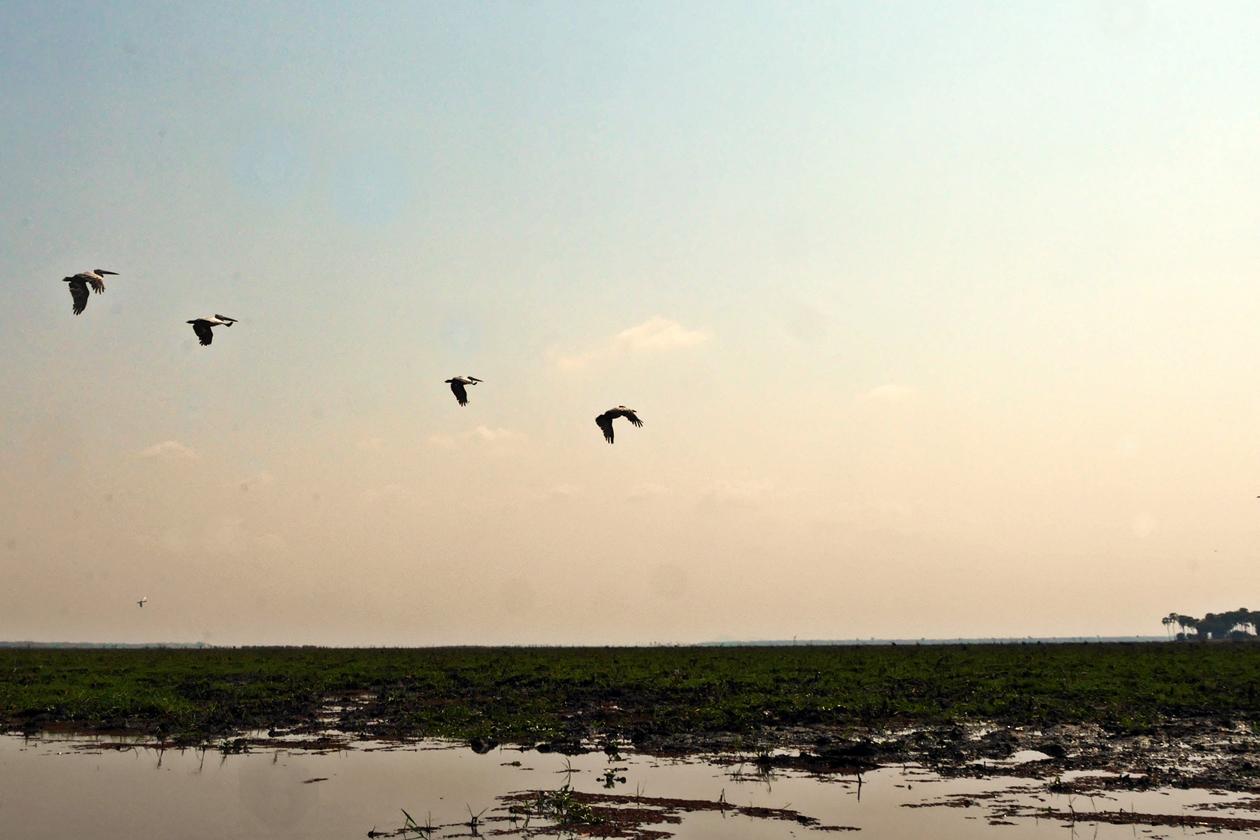 Pelikane im Flug im Liwonde Nationalpark in Malawi als Beitrag zur Fotoparade 2/2018