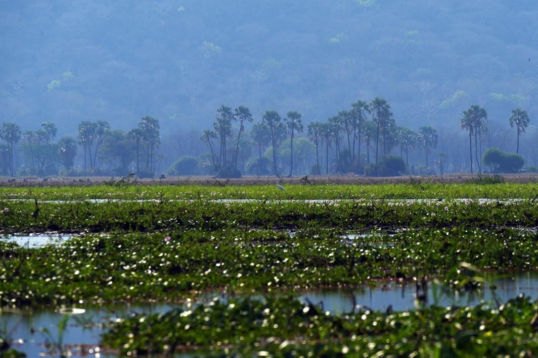 Blick über den Shire River im Liwonde Nationalpark in Malawi