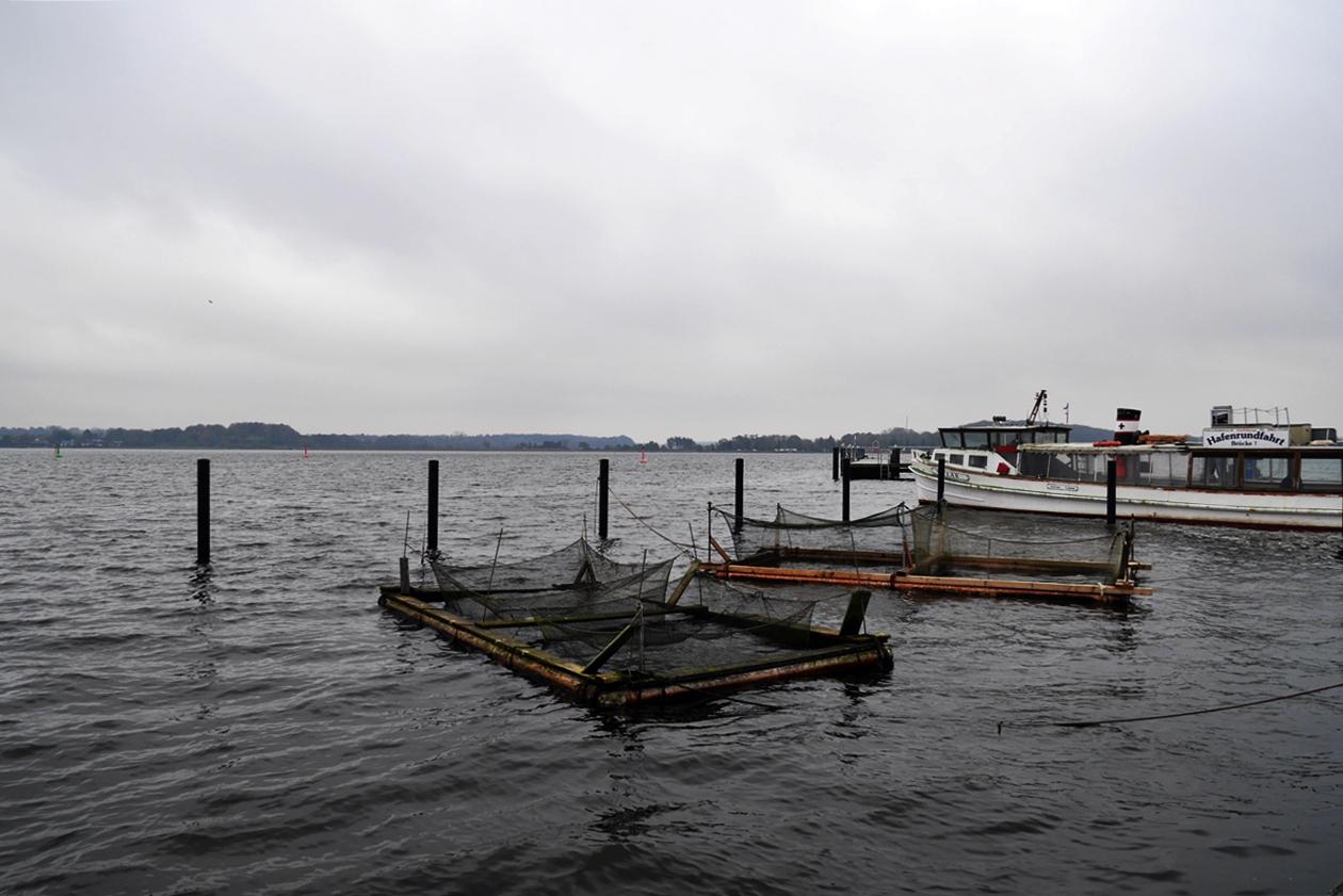 Blick auf Fischerreusen in der Schlei bei Schleswig