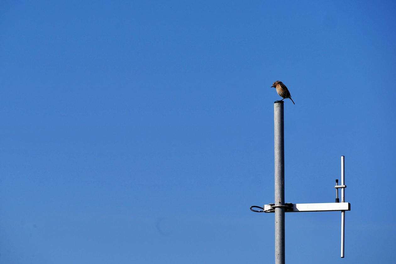 Vogel auf einer Antenne