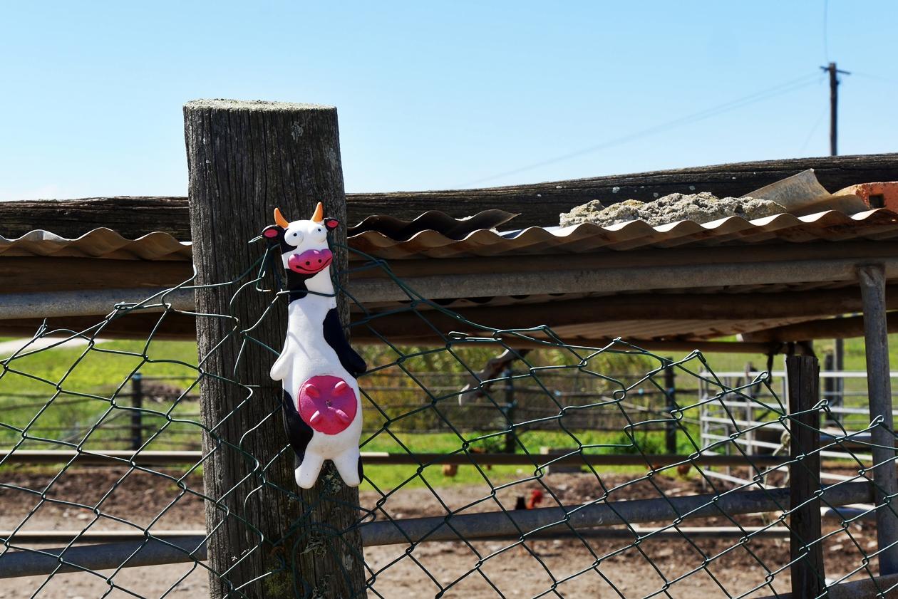 Eine Spielzeug Kuh klemmt an einem Zaun