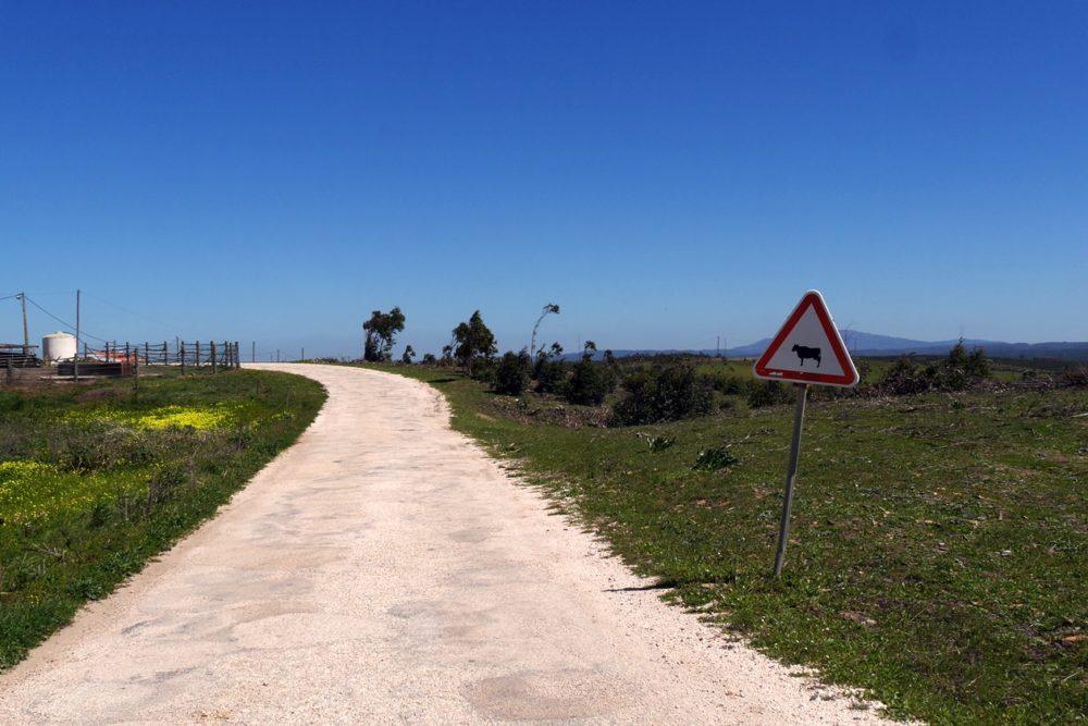 Warnschild vor Kühen auf der Rota Vicentina