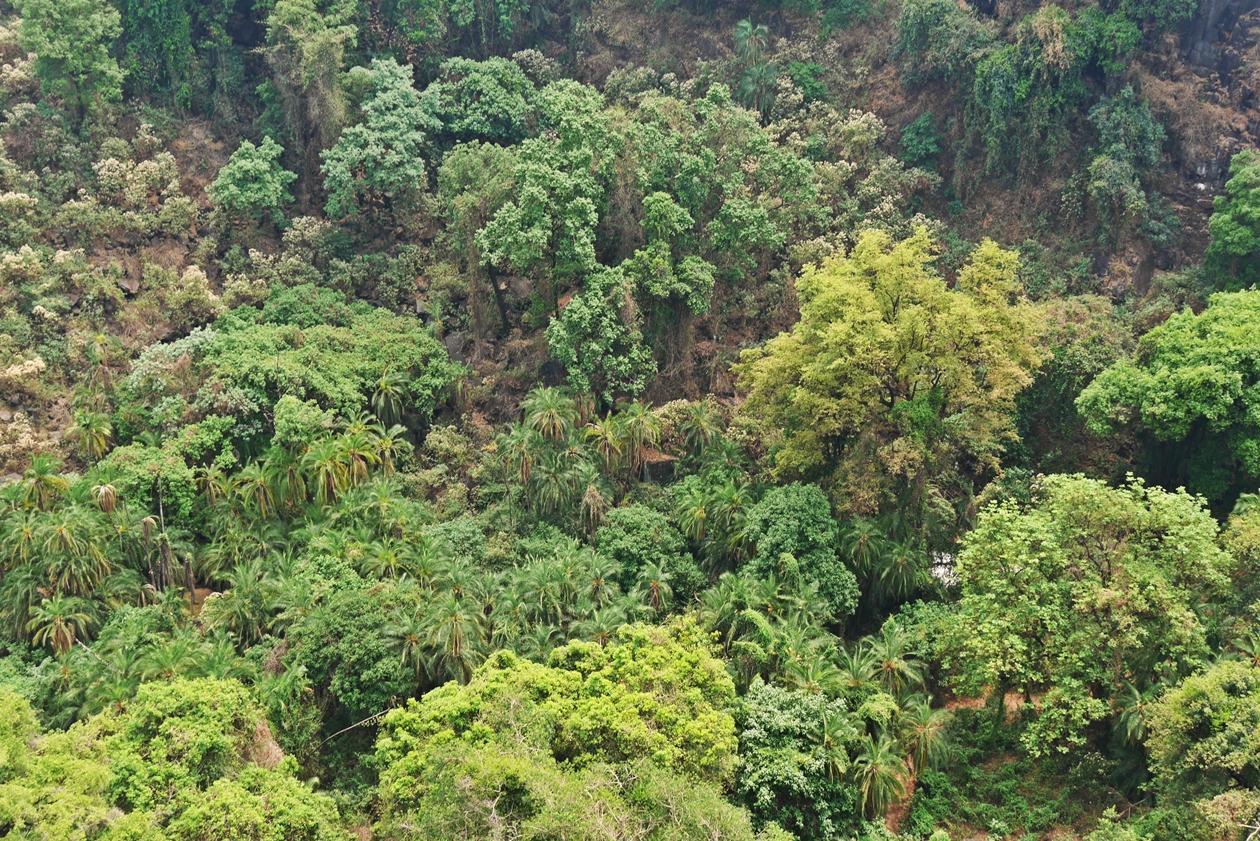 Nahaufnahme des Regenwaldes an den Victoria Fällen