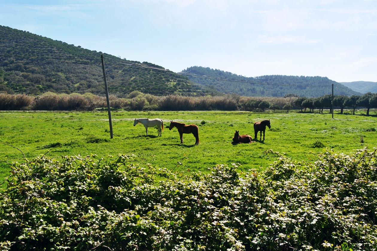 Pferdeweide entlang des Historical Ways in Portugal
