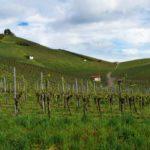 Zu Gast im Schwabenland – Neckarsulm und Umgebung