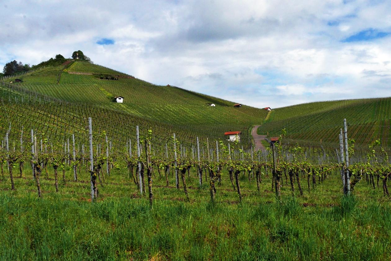 Weinberge in Neckarsulm und Umgebung
