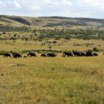 Wie beantrage ich ein Visum für Kenia?