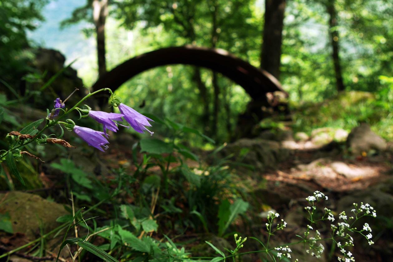 Alter Schützengraben in der Nähe von Bovec