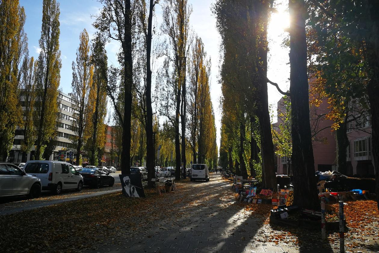 Allee zur Maxvorstadt in München