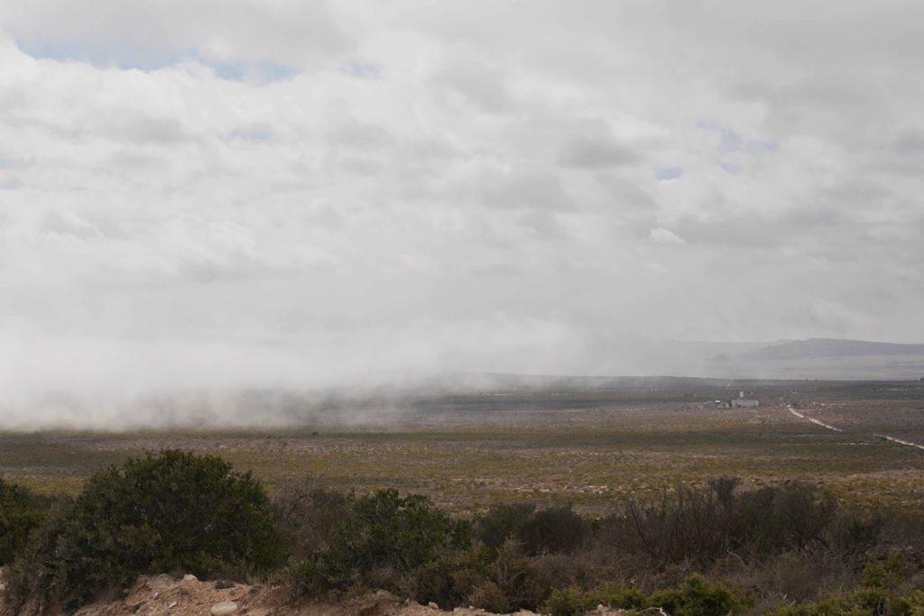 Seenebel kriecht über die Fynbos Vegetation im Cape Columbine Nature Reserve